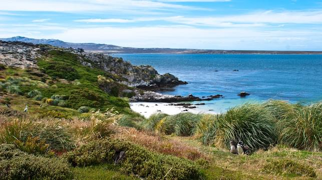 Landscape view of Falkland Islands}