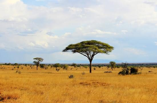 Landscape view of Kenya}