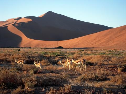 Landscape view of Namibia