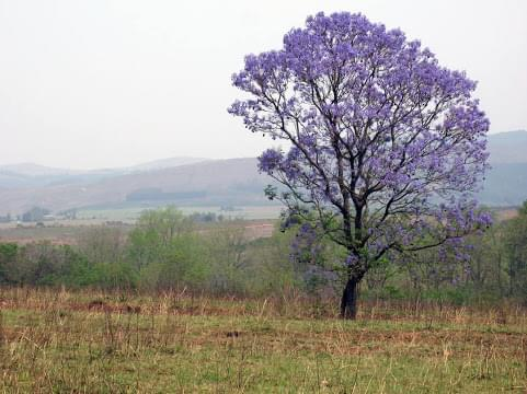 Landscape view of Eswatini}